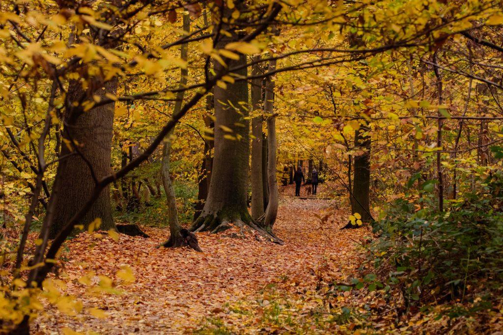 Provinciaal domein Nieuwenhoven - herfst.