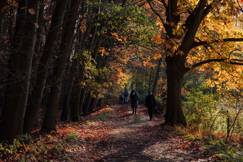 Munsterbos in Bilzen: mijn eerste herfstfoto's