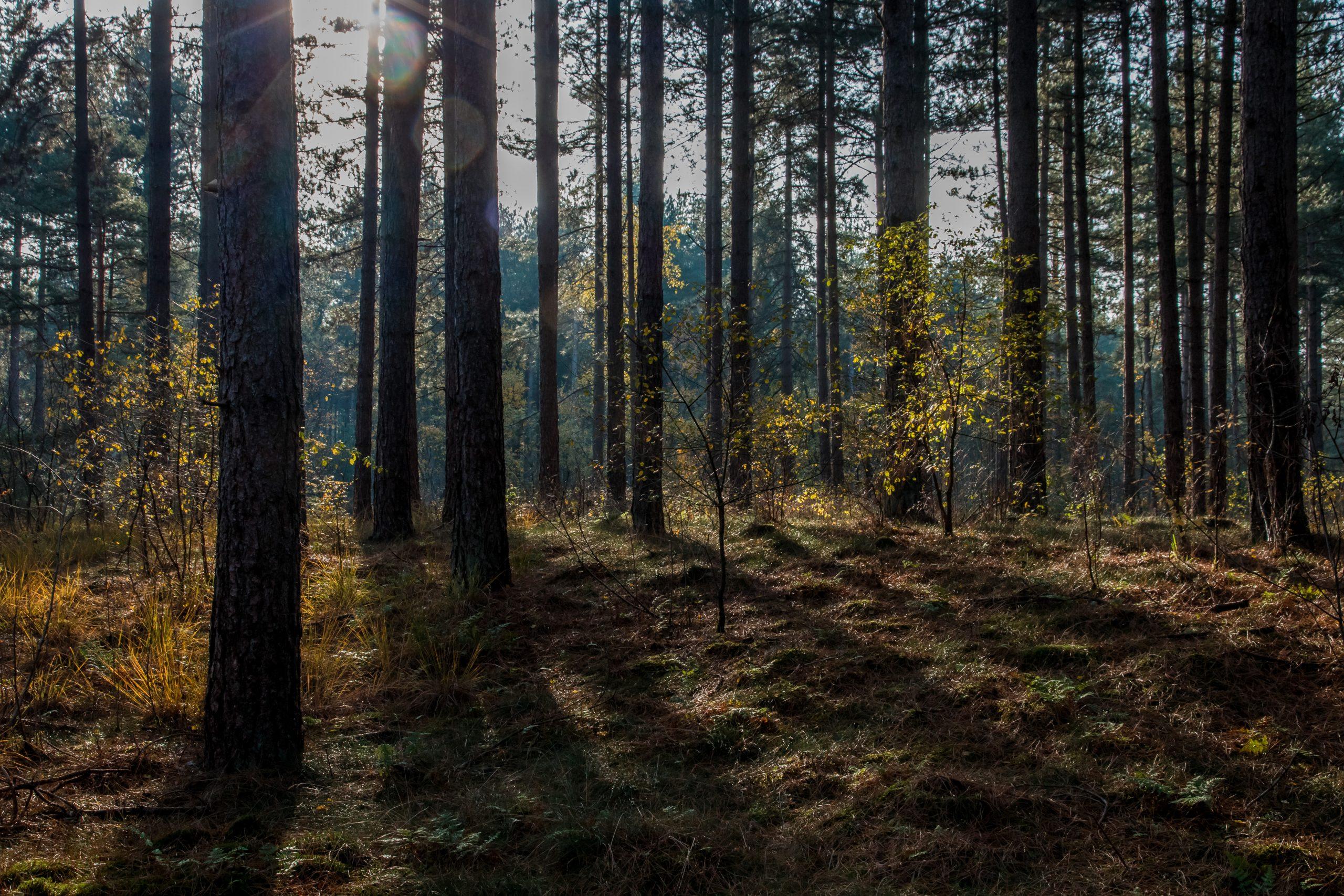 Blogwandeling Pijnven en fietsen door de bomen, Hechtel-Eksel