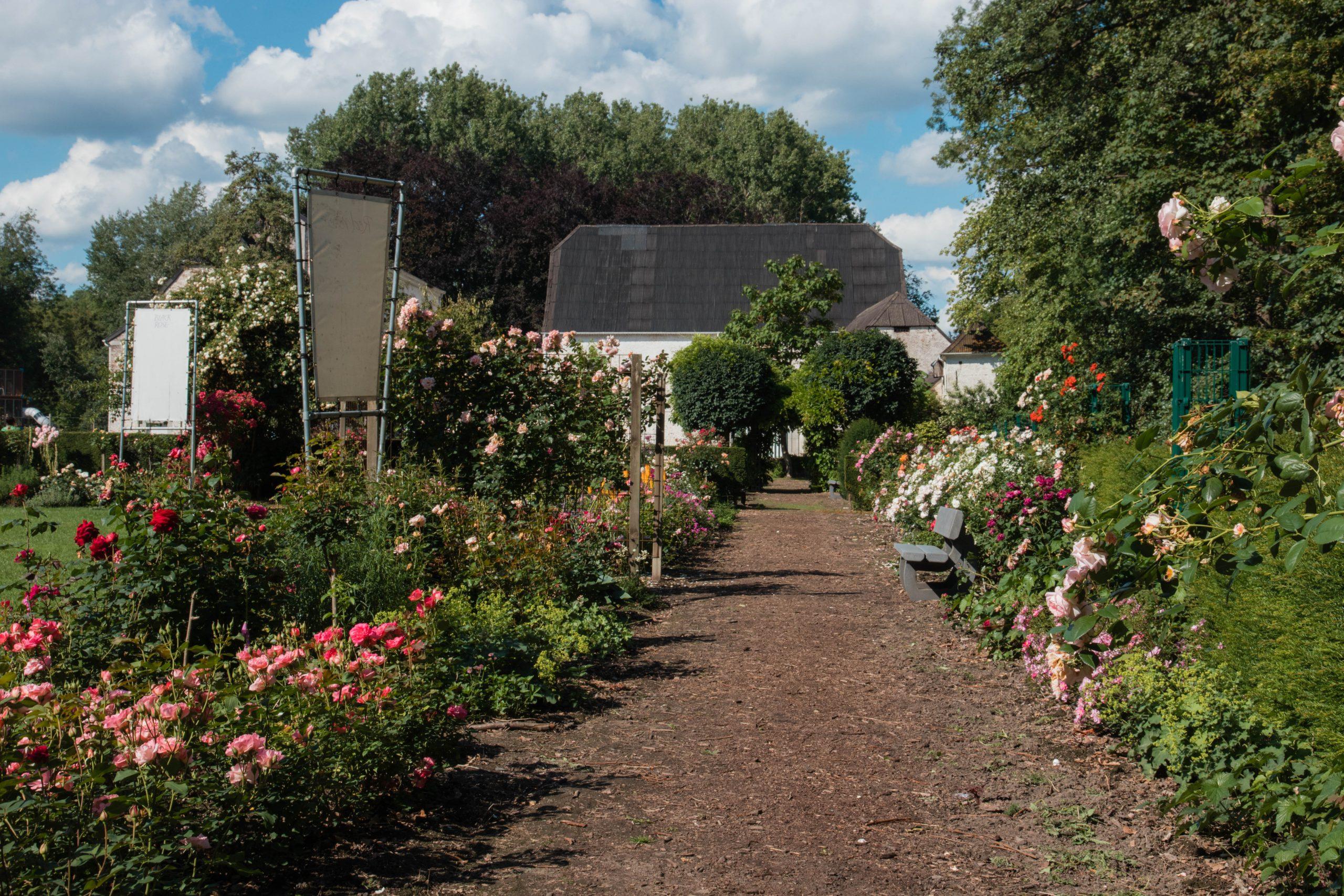 De rozentuin in Sint-Truiden: mijn vaste wandeling